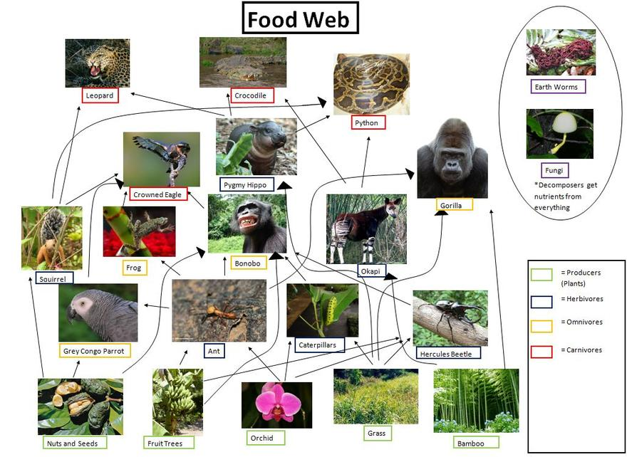 Congo Food Web Food