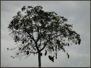 2010 Venezuela 36