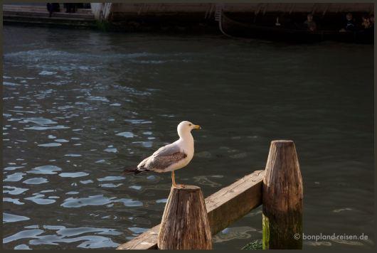 2011 Venedig Schweiz 90