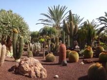 Fuerteventura 2017-17