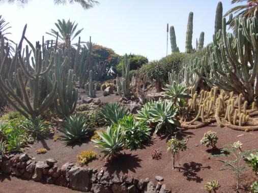 Fuerteventura 2017-29