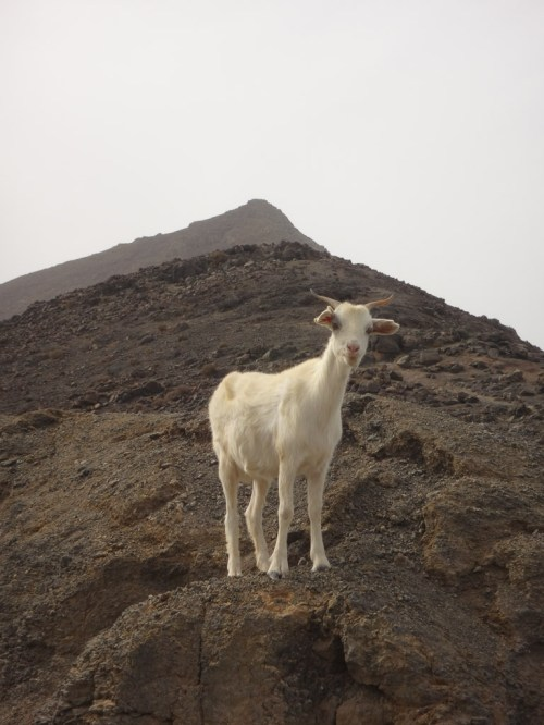 Fuerteventura 2017-42