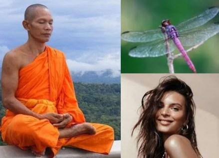 une des 30 questions indispensables :  libellule ou Emily?