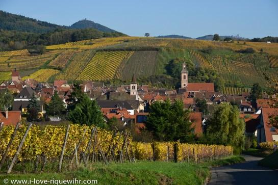Riquewihr et ses vignobles un 31 octobre.