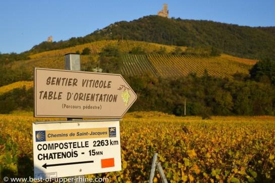 surplombant les vignes près du village de Scherwiller