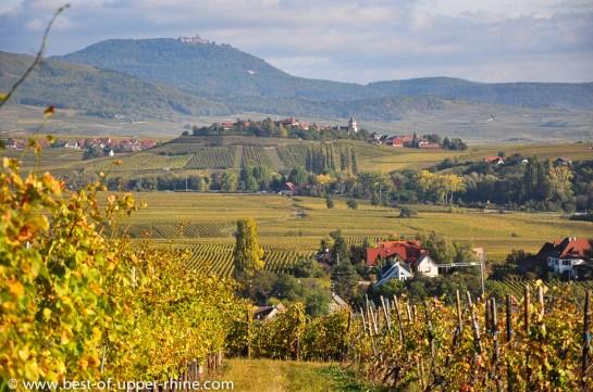 Vignes sur les coteaux des environs de Riquewihr et Zellenberg.