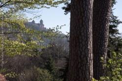 Silhouette du château du Haut-Koenigsbourg