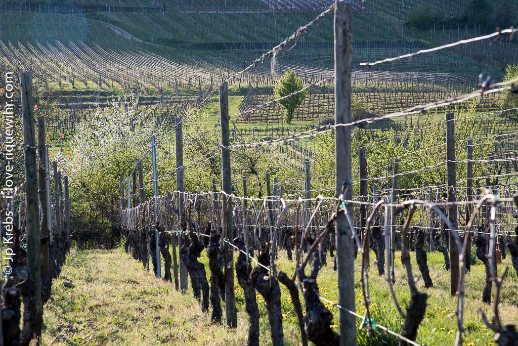 Les vignobles du Rosenburg, Oberberg et Froehn.
