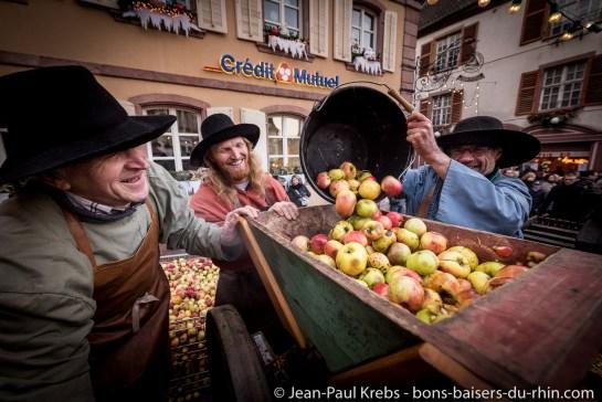Préparation des pommes à presser.