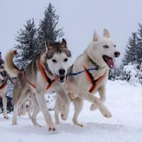 A la course de chiens de traîneau du Lac Blanc