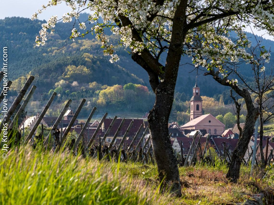 Riquewihr, Alsace, au printemps