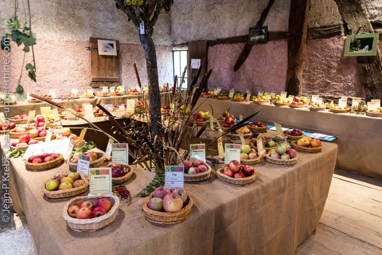 Exposition de pommes et de poires de variétés anciennes présentée par la fédération des arboriculteurs du Haut-Rhin.