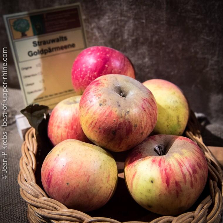 Pommes d'aujourd'hui et d'antan à l'Ecomusee d'Alsace. Goldpärmeene.