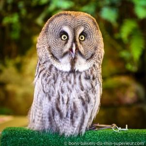 Quel regard ! La volerie des aigles nous présente leurs oiseaux nocturnes