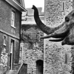 tour-de-londres-reproduction-animaux-elephant
