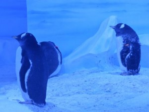 sea-life-aquarium-londres-pingouins