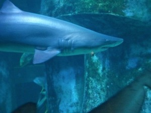 sea-life-aquarium-londres-tete-requin