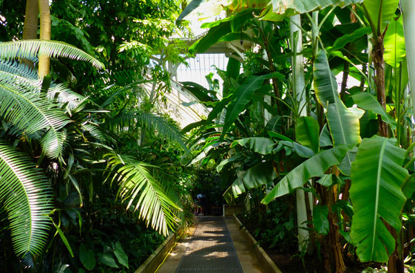 kew-gardens-palm-house-serre