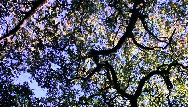 Fen-court-garden-arbres