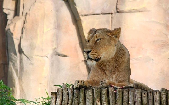 zoo-enfants