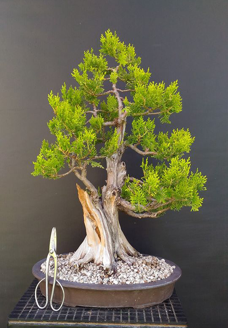 Wiring A Bonsai