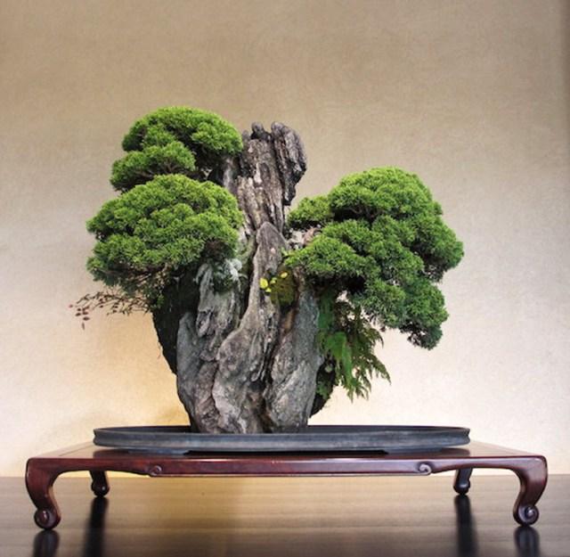 juniper-bonsai-rock-omiya