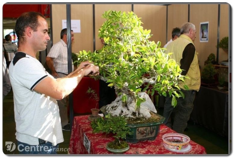ficus_thierry-1
