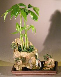 Bonsai Tree Good Luck : bonsai, Money, Bonsai, 'Good, Tree'Double, Landscape, Artificial, Waterfall, (pachira, Aquatica)