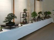 2010 -expo saint remi - 008