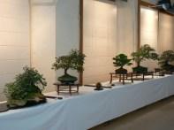 2010 -expo saint remi - 011