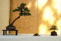 2010 -expo saint remi - 042