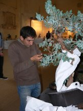 2010 -expo saint remi - 058