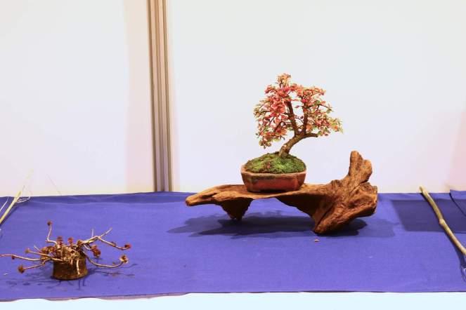 053-flemming-e-cotoneaster