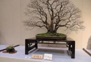 Kokufu Ten 2013 JS (25)