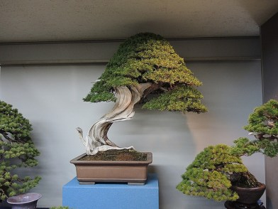 Kokufu Ten 2013 JS (30)