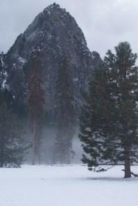 Yosemite | Bonsai Hewes