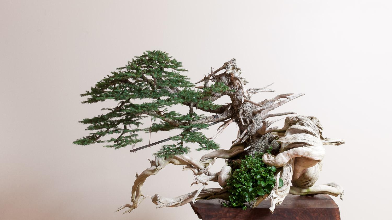 Bonsai Gallery  Bonsai Mirai