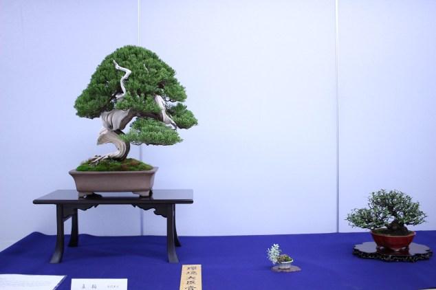 koiya_044