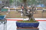 Guangzhou penjingi exposition 033