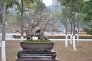 Guangzhou penjingi exposition 057