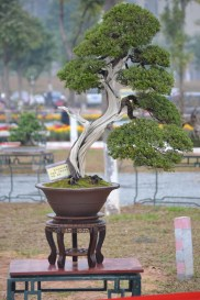 Guangzhou penjingi exposition 075