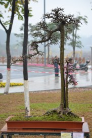 Guangzhou penjingi exposition 121