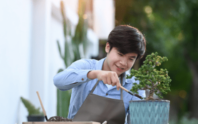 The Health Benefits of Growing a Bonsai Plant