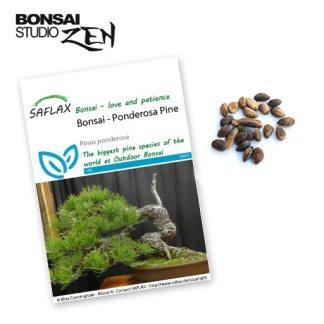 Pinus ponderosa zaden