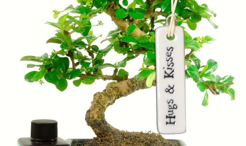 Bonsai Trees As a Gift