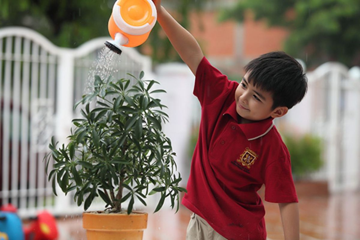 Taking Care of your Bonsai