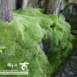 [日本庭園]京料理.瓢亭の美