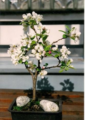Apfel 2001, Mai