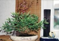 Bambus 1998