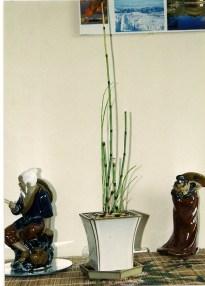 Japangras 2002